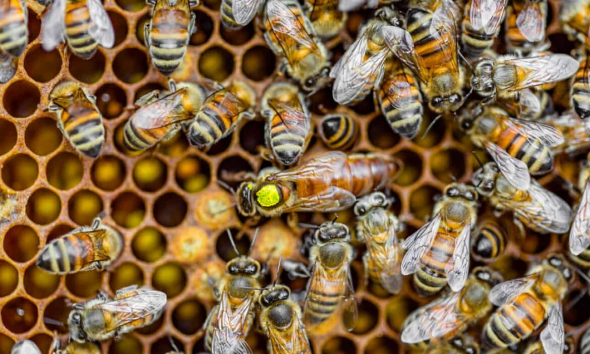 Save the queen, save the hive: how to live in harmony with bees