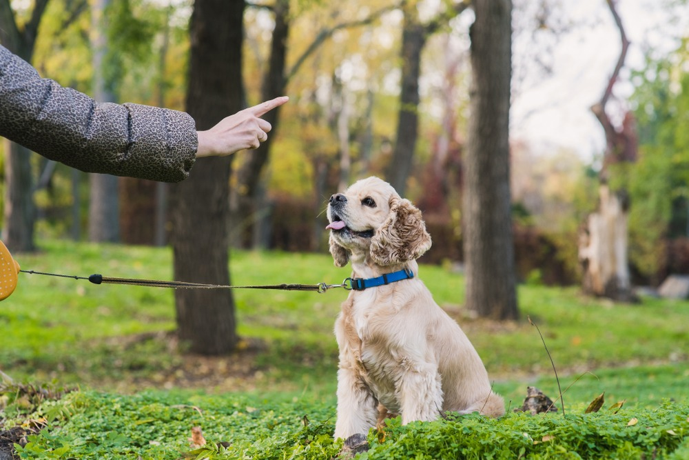 Use These Tips To Teach Fido Some New Tricks